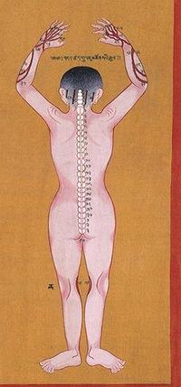 Методика терапии в концепции «Установок тела».